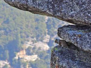 Fliegen, Eichhörnchen, Yosemite