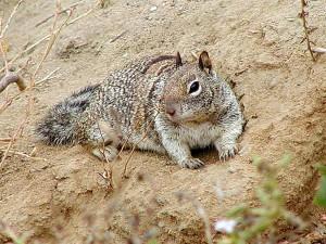 squirrel, dirt, sand