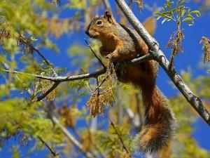 squirrel, trees