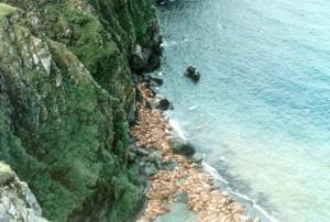 walruses, down, rocky, beach