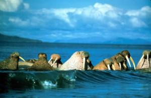 morsas, las ondas