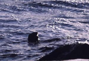 balena, oceano, acque