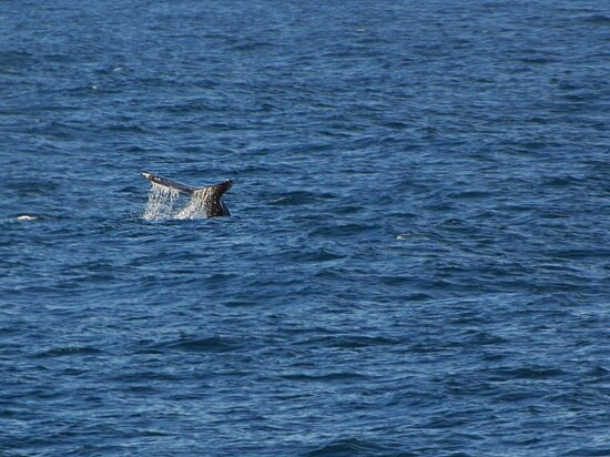 whales, tails, ocean