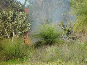 incendios forestales, incendios, el humo, las plantas verdes
