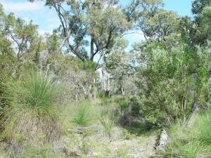 bushland, tamala, park