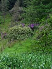 Deerpark, Irland, damme, buske