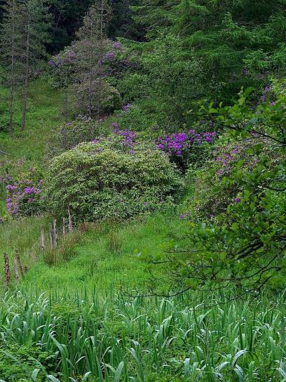 Deerpark, l'irlande, les étangs, les buissons