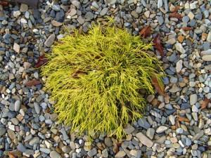 gravel, pebbles, bush