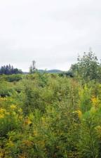 zeleno grmlje, grmlje, biljke, polja
