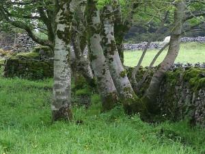 en direct, buisson, clôture