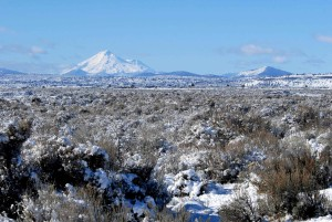 sagebrush, covered, snow