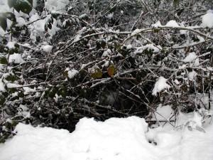 snježne, grane