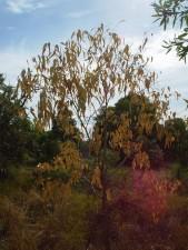vode, šokiran, stablo, park, bushland