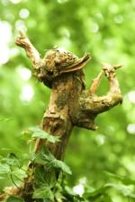 clambering, biljka