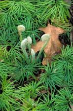 sresti, maglovito, boji, uvijen, biljka