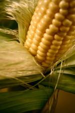 corn, plant