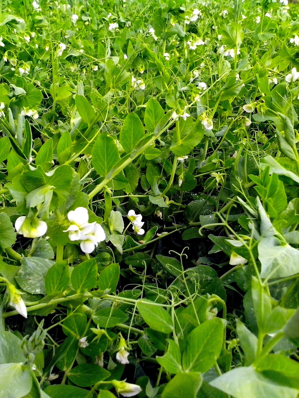 Free photograph; plant, green, garden