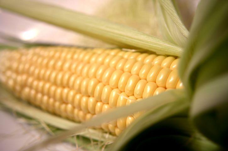 uncooked, golden, ear, corn