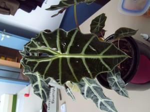 exotic, plant, leaf