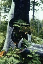 ferns, tree, stump