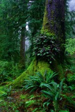 helechos, crecen, edad, crecimiento, árbol, selva, escénico