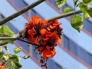 flower, leaves