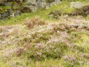 flowering, plants