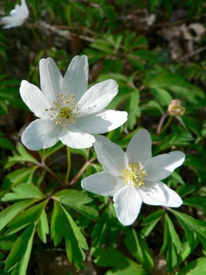 wood, anemone, grass