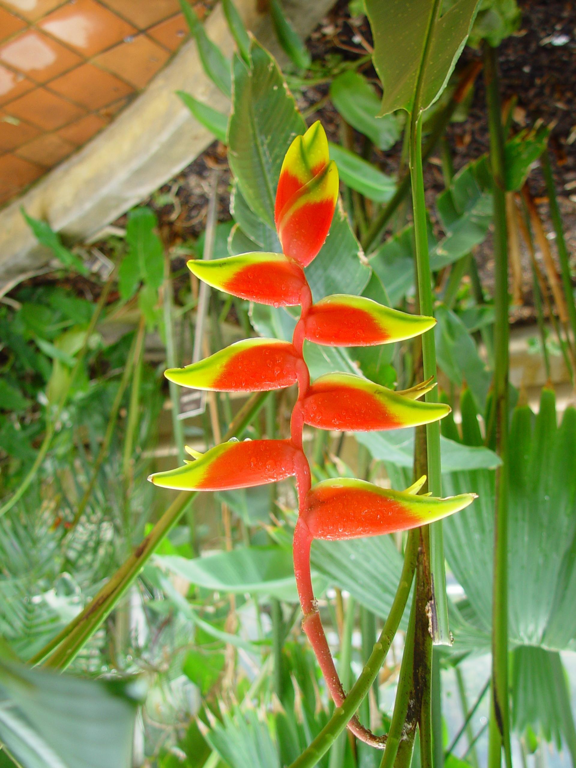 Beaks, Flowers, Adelaide, Botanical, Gardens, Australia