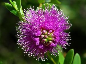 beautiful, purple flower