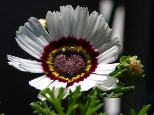 belle, fleur blanche, parc