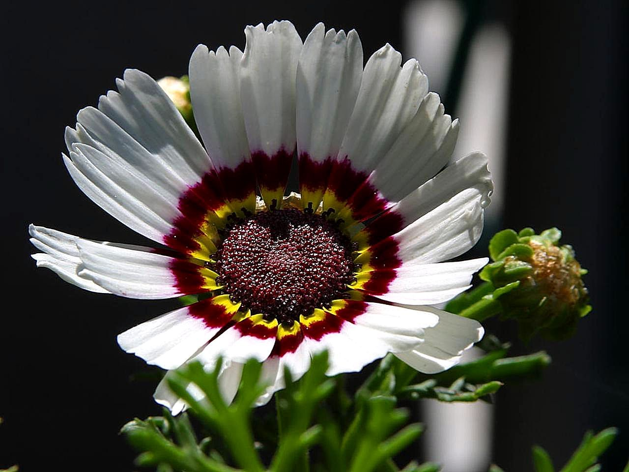 Free picture beautiful white flower park beautiful white flower park izmirmasajfo