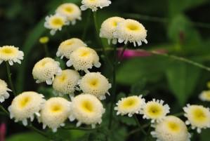 belles, jaunes, fleurs