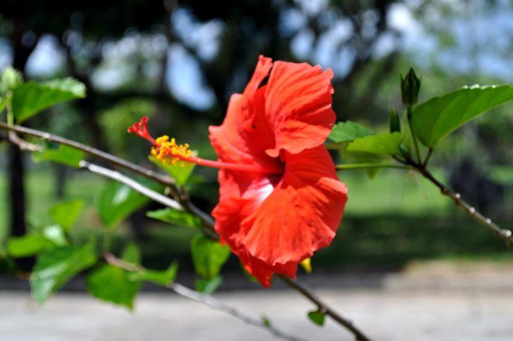 blooming, orange, red flower, petals