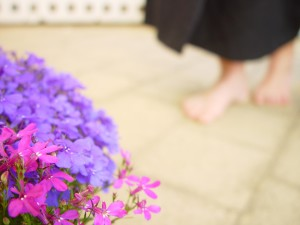 blau, lila Blumen, Pflaster