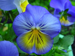 μπλε, κίτρινο, γρασίδι, λουλούδια