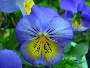 bleu, jaune, herbe, fleurs