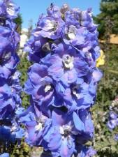 blue, spring, flowers