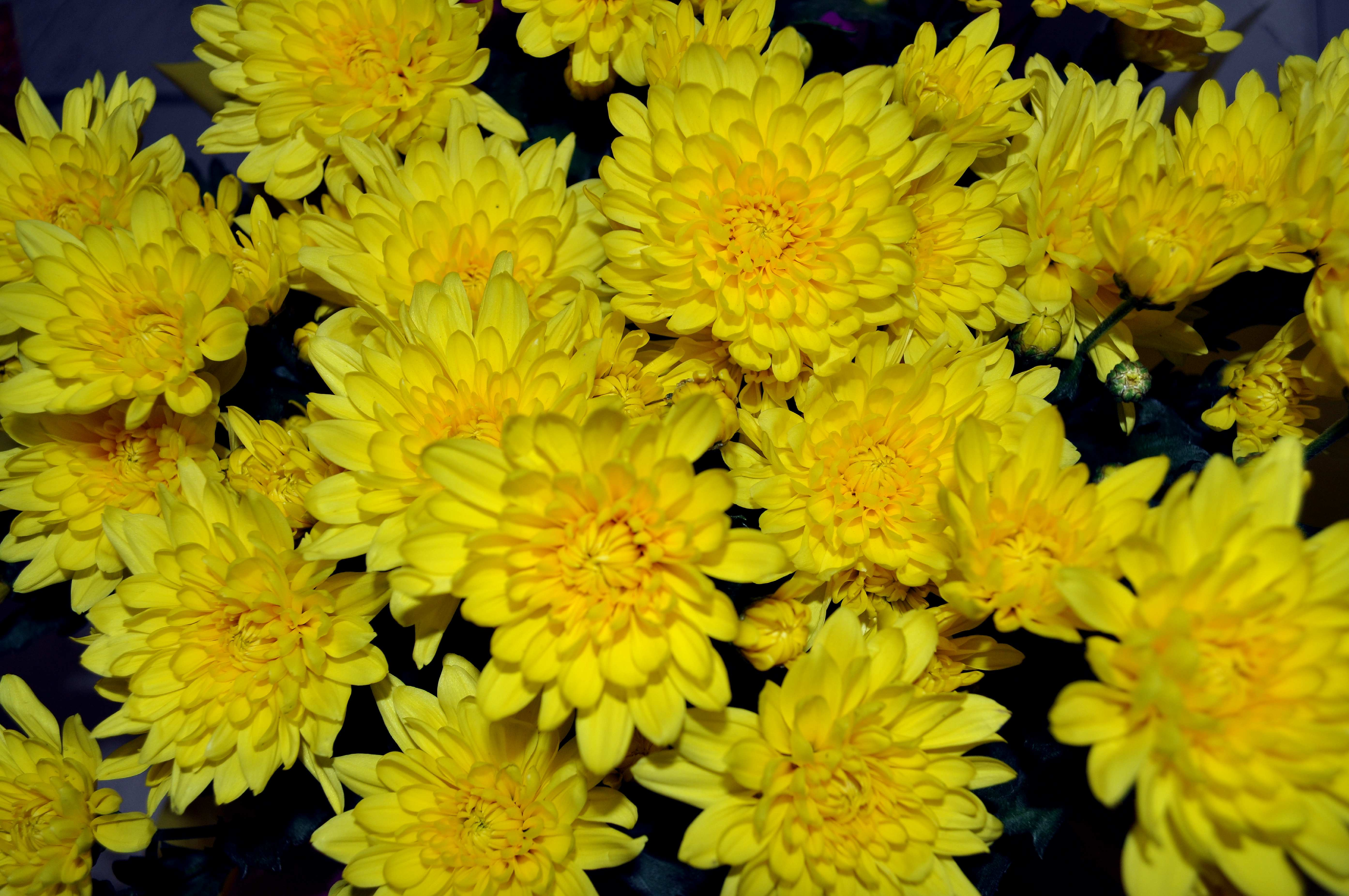 Free photograph; bouquet, yellow, flowers