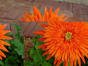 bright, orange flower