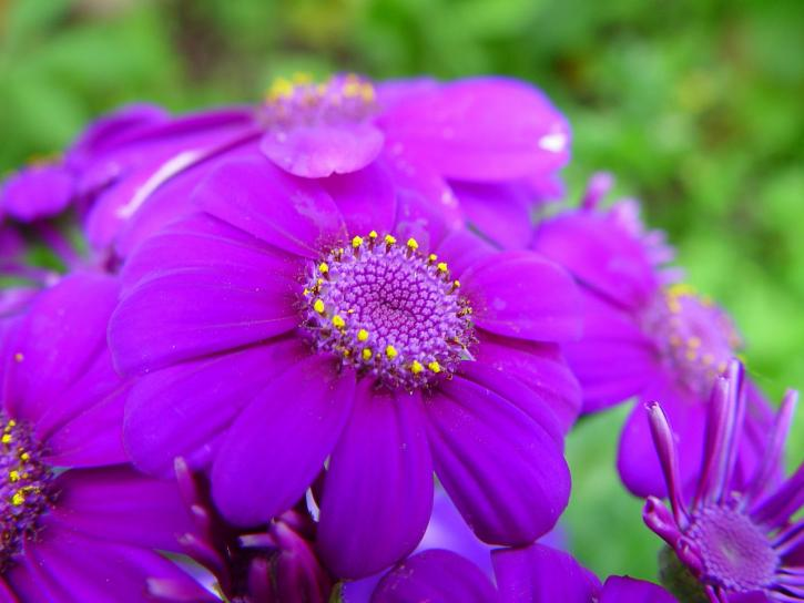 bright, purple flowers