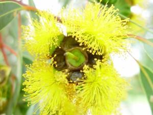 giallo brillante, gomma, fiori