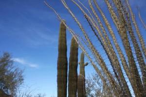 cactus, plantes, désert