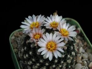 kaktus, freee, Foto