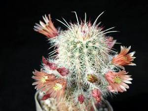 cactus, studio, conditins