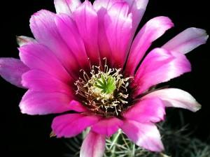 detaljer, foto, kaktus