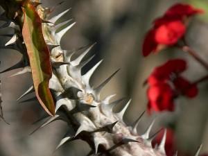 spine, cactus