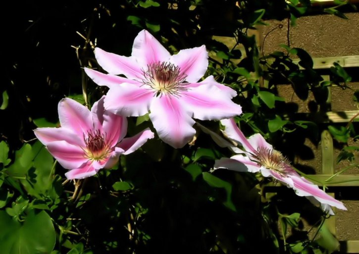 clemitis, nelly, moser, fleur