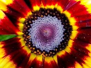 up-close, orange flower, petals