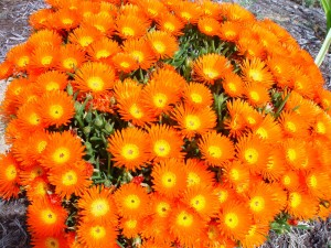 las matas, brillante, flores de color naranja